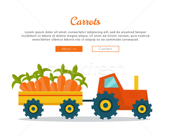 Carrot Farm Web Vector Banner in Flat Design.  Stock photo © robuart
