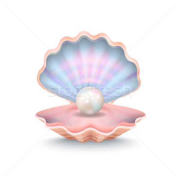 Closeup of Pearl and Shell Vector Illustration Stock photo © robuart