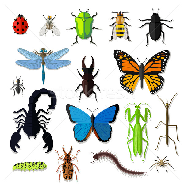 Set of Various Insects Design Flat Stock photo © robuart