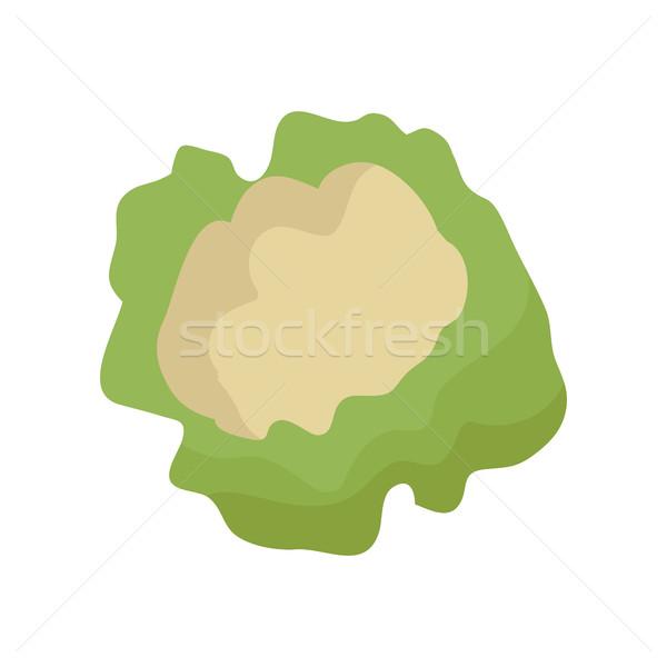 Karfiol stílus terv vektor zöldség illusztráció Stock fotó © robuart