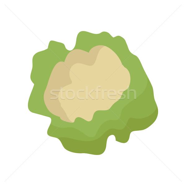 Couve-flor estilo projeto vetor vegetal ilustração Foto stock © robuart
