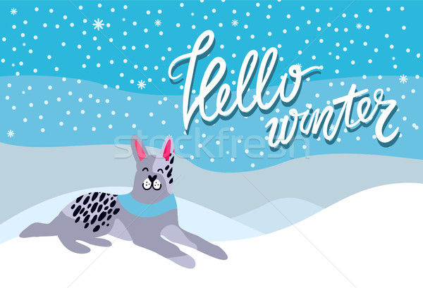 Hello Winter Poster with Spotted Grey Dog Collar Stock photo © robuart