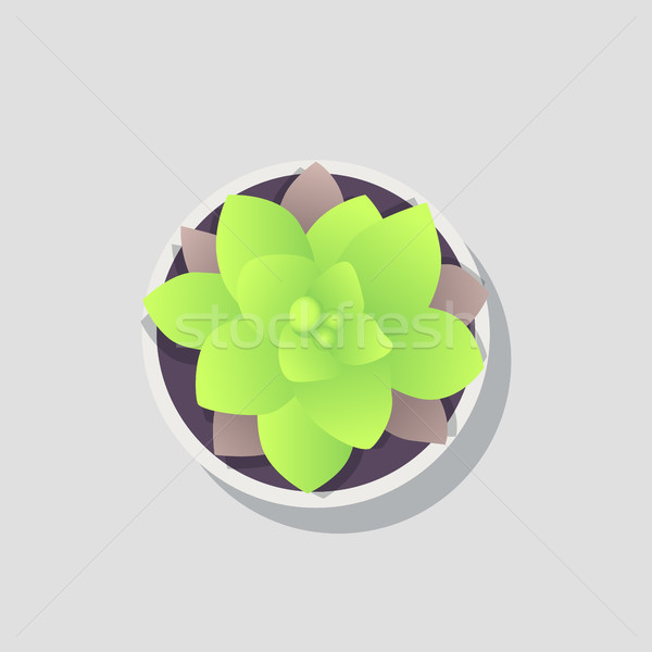 Potted Flower Image Isolated on Bright Backdrop Stock photo © robuart
