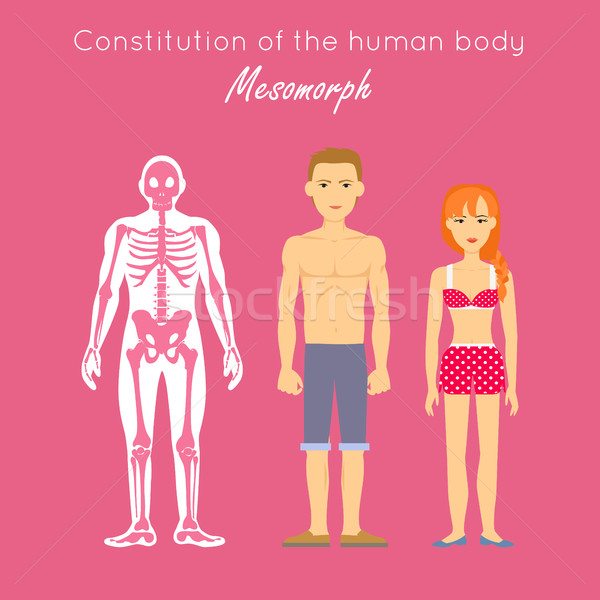 Constitution of Human Body. Mesomorph. Vector Stock photo © robuart