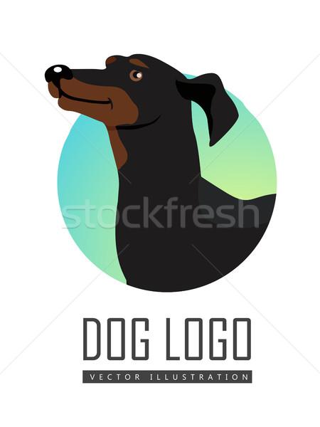 Daksund köpek logo beyaz siyah Stok fotoğraf © robuart