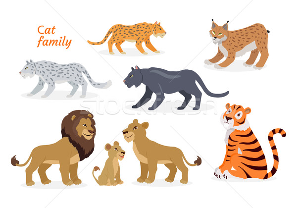 Cat family. Felidae. Pantherinae Tiger Lion Jaguar Stock photo © robuart