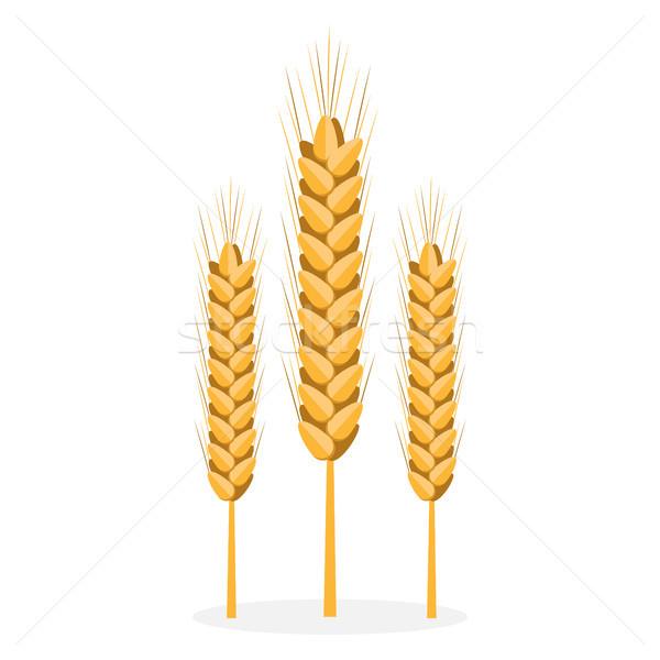 Golden Organic Bread Spikes Isolated Illustration Stock photo © robuart