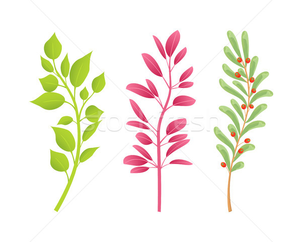 Branches of Plants with Green and Red Leaves Set Stock photo © robuart