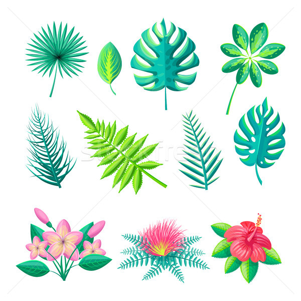 Leaves and Flowers Collection Vector Illustration Stock photo © robuart