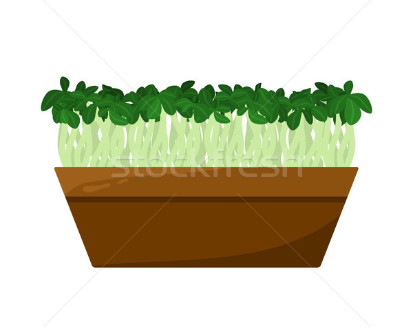 Flax Sprouts Potted in Brown Container, Color Card Stock photo © robuart
