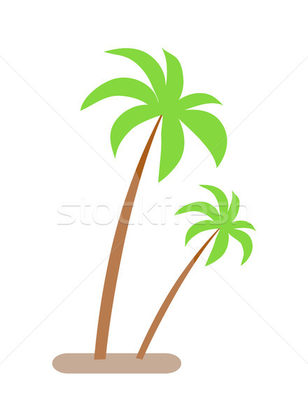 Palm Trees with Green Leaves and Trunk Growing Stock photo © robuart