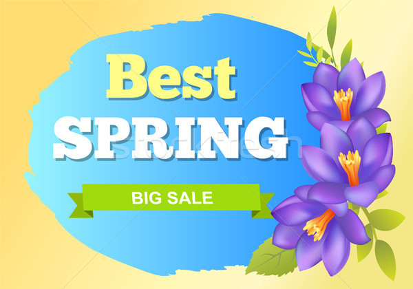 Best Spring Big Sale Advertisement Label Crocus Stock photo © robuart