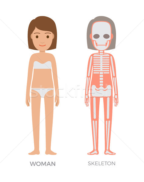 Woman Anatomy and Skeleton Struct Colorful Banner Stock photo © robuart