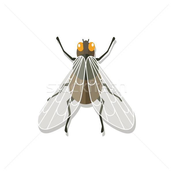 Légy közelkép átlátszó szárnyak rovar képesség Stock fotó © robuart