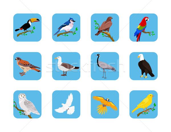 Colección aves diseno vuelo búho Foto stock © robuart