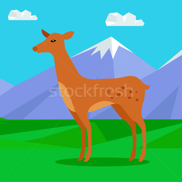 Fawn on Lawn in Mountains. Young Deer Stock photo © robuart