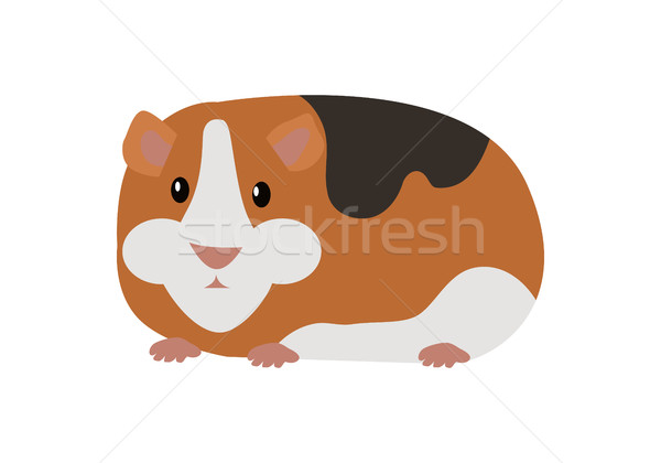 Guinea Pig Cavia Porcellus Isolated Cartoon Animal Stock photo © robuart