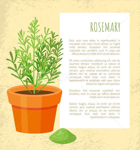 Romero especias anunciante texto naturales condimento Foto stock © robuart