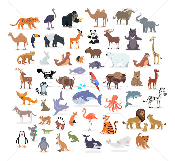 Animal Full Length Portraits Collection on White Stock photo © robuart