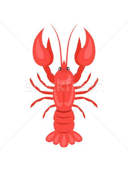 Red Crayfish Vector Illustration Isolated on White Stock photo © robuart