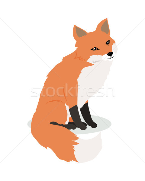 Fox Cartoon diseno cute vector Foto stock © robuart