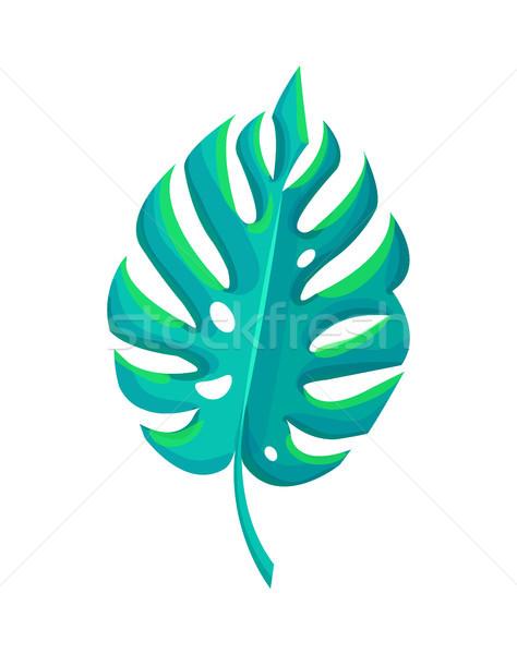 Botanikus alkotóelem trópusi levél zöld búcsú Stock fotó © robuart
