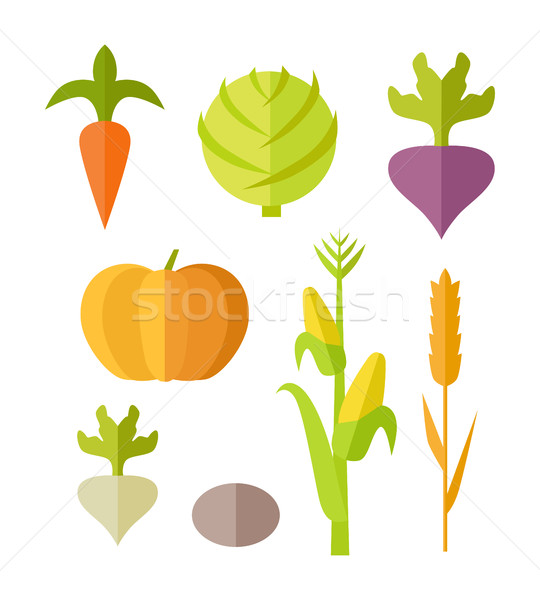 Set of Vegetables Vector Illustration.   Stock photo © robuart