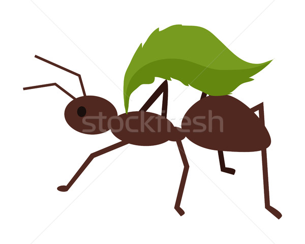 Brown Ant with Green Leaf Stock photo © robuart