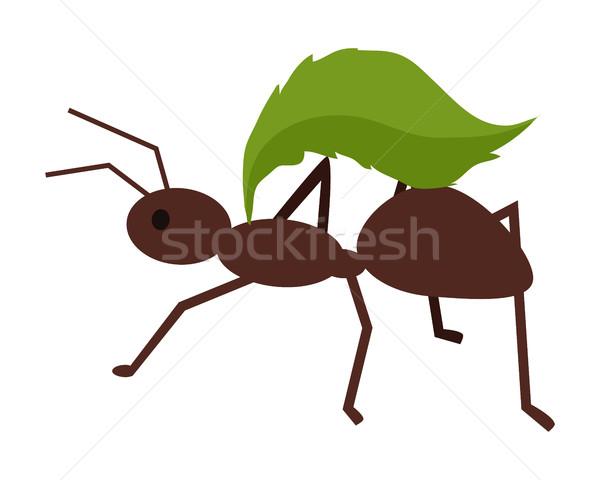 Brązowy ant zielony liść liści ikona Zdjęcia stock © robuart