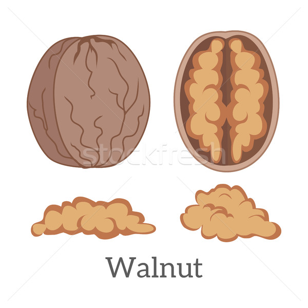 Illustration of Walnut Kernels Stock photo © robuart