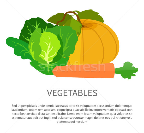 野菜 ポスター カボチャ キャベツ ニンジン 緑 ストックフォト © robuart