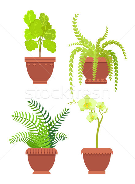 Flowers Potted Room Plants Vector Illustrtaion Stock photo © robuart