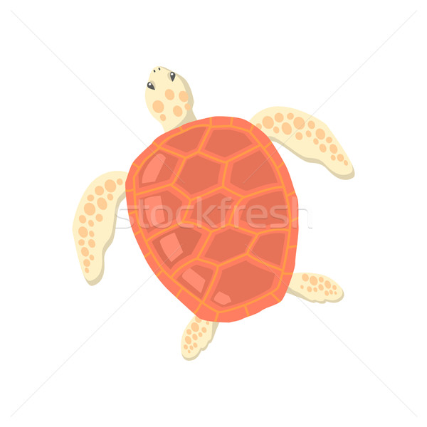 Turtle Isolated on White Background Stock photo © robuart