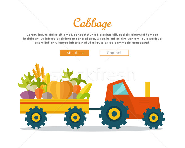 Cabbage Farm Web Vector Banner in Flat Design.  Stock photo © robuart
