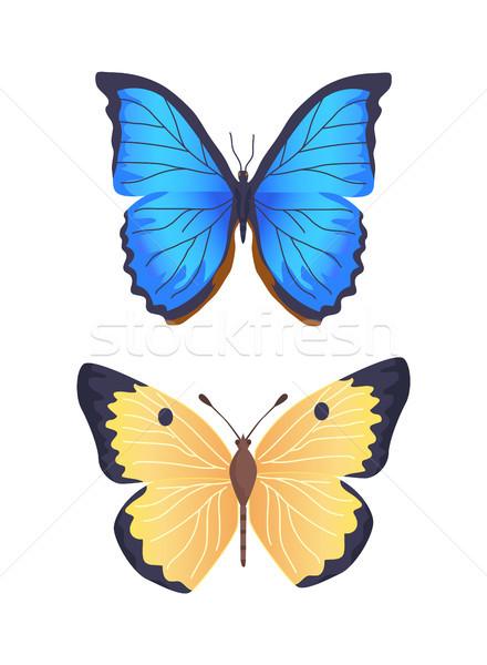 Сток-фото: бабочки · коллекция · плакат · насекомое · различный · крыльями