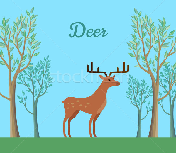 Red Deer in the Forest. Ruminant Mammal Stock photo © robuart