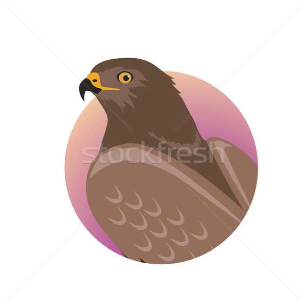 Hawk Flat Design Vector Illustration Stock photo © robuart