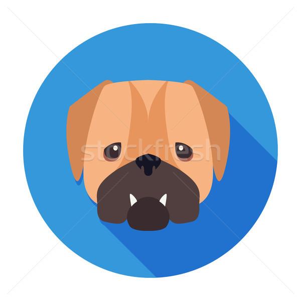 Torkolat angol bulldog rajzolt művészet ikon Stock fotó © robuart