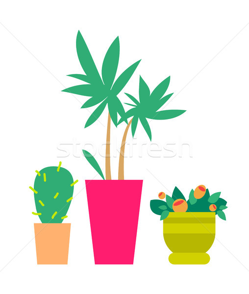 Stock photo: Three Cute Plants Color Banner Vector Illustration
