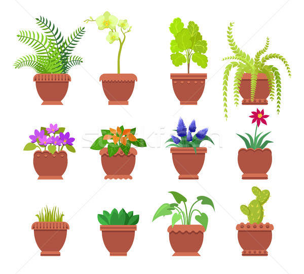 Cactus Collection of Plants Vector Illustration Stock photo © robuart