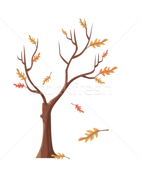 Isolated Oak Tree with Falling Leaves Stock photo © robuart