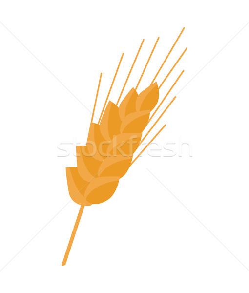 Fül borravaló szár gabonapehely növény búza Stock fotó © robuart