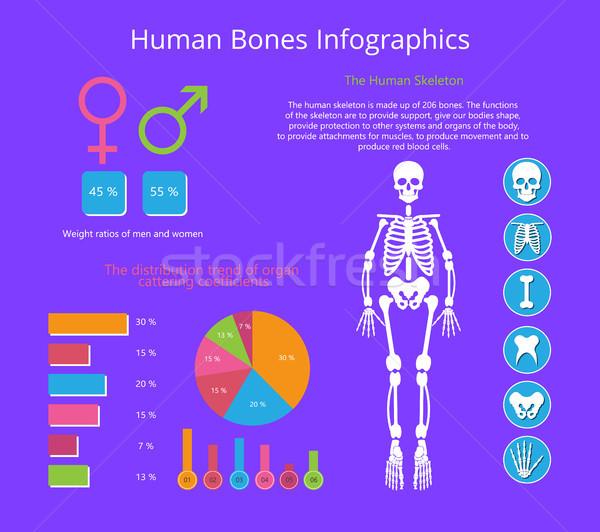 Stock fotó: Emberi · csontok · infografika · színes · vektor · poszter