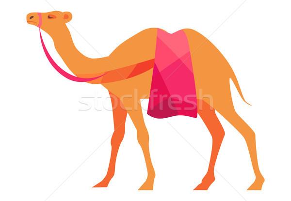 индийской верблюда изолированный белый арабский млекопитающее Сток-фото © robuart