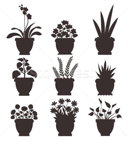 House Plants in Pot Collection Vector Illustration Stock photo © robuart
