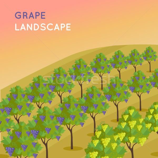 Szőlőskert ültetvény szőlő bor tájkép megnőtt Stock fotó © robuart