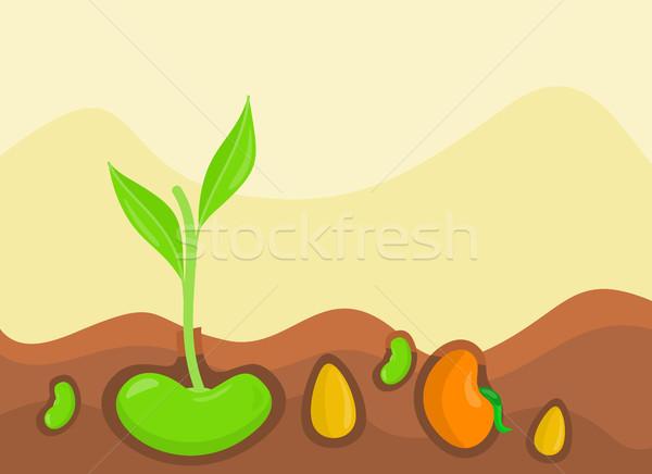 Plantas crescente terreno colorido projeto legumes Foto stock © robuart