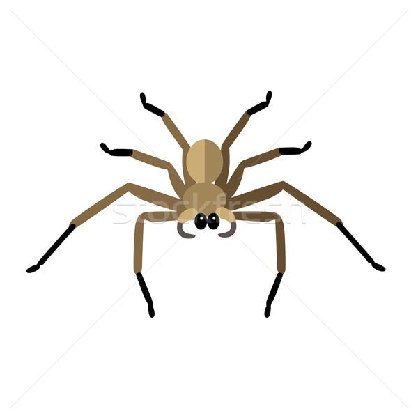 Pók ikon vektor logo izolált fehér Stock fotó © robuart