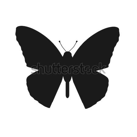 Haşarat kelebekler yalıtılmış beyaz güzel kelebek Stok fotoğraf © robuart