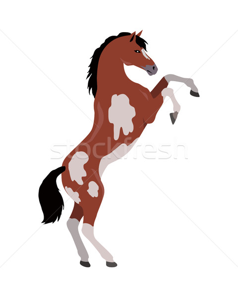 Rearing Pinto Horse Illustration in Flat Design Stock photo © robuart
